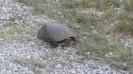 Turtle2 Quinte West