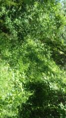 frankford ontario grass