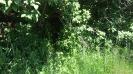frankford ontario weeds